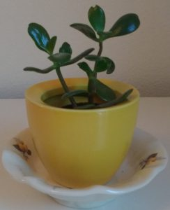 upcycled plant pot