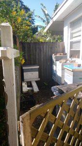 beekeeping side hustle